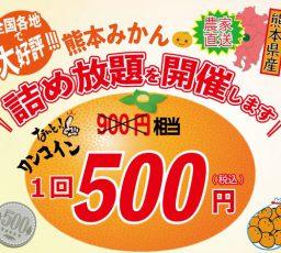 11/9~11 熊本ミカン詰め放題イベントを行います写真